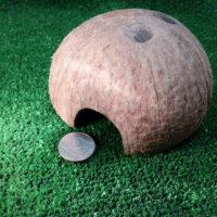 кокосовый домик